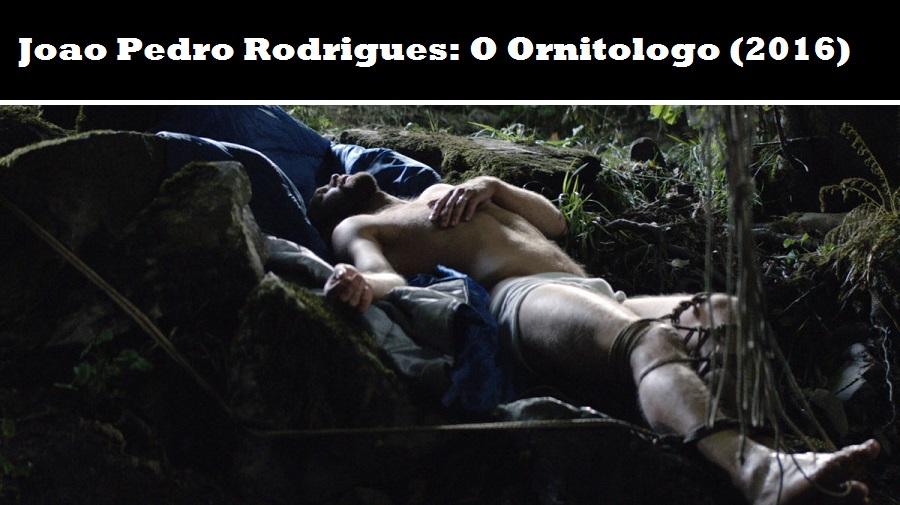 r-ornitolog
